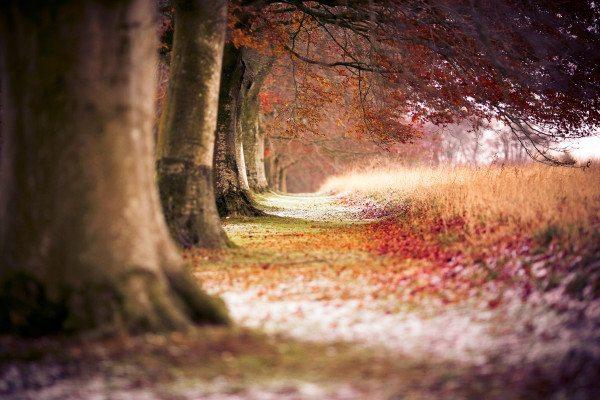 nature-landscapes_widewallpaper_beautiful-path_4680